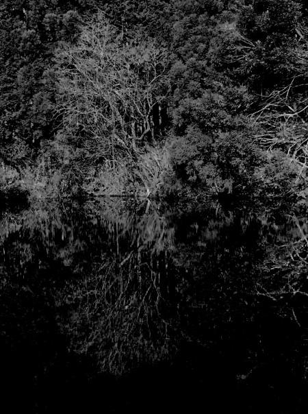 モノクロ池